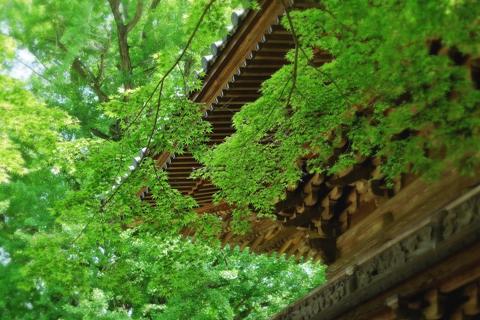 静岡県の歴史的建築物 芝川西山本門寺の鐘楼