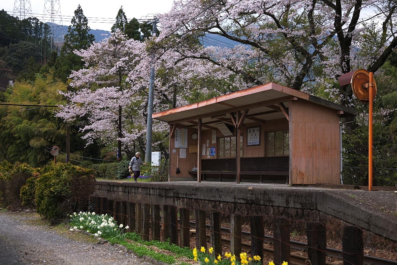 青部駅の桜が見たくて・・・。 ...