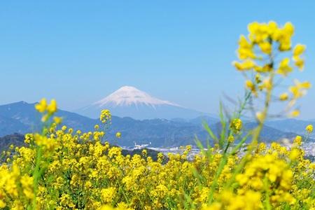 静岡ののどかな風景 450