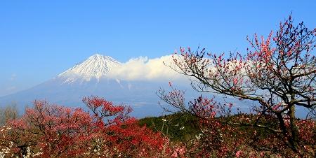 この美しき富士山を守りたい