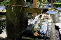 京都・上賀茂神社(手水舎)