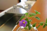 小花のディスプレー