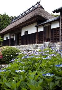 大鐘家 長屋門とアジサイの花