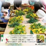 ミモザのリース教室  ブログ11